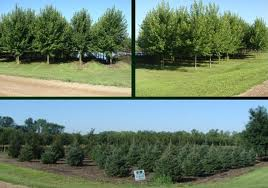 big-tree-transplanting-&-nursery