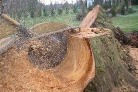 stump-removalgrinding